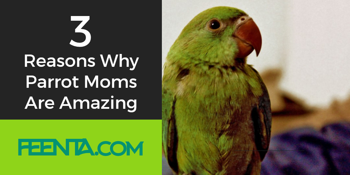 parrot moms amazing