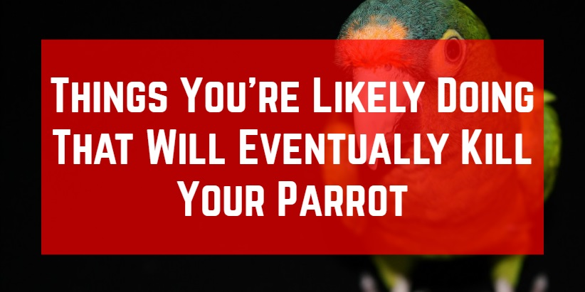 things that could harm your parrot