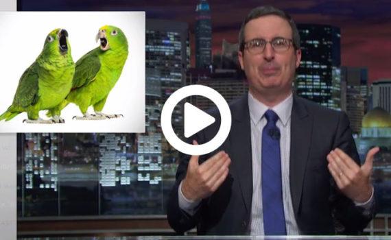 john oliver on birds