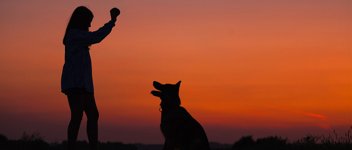 commands to train your dog
