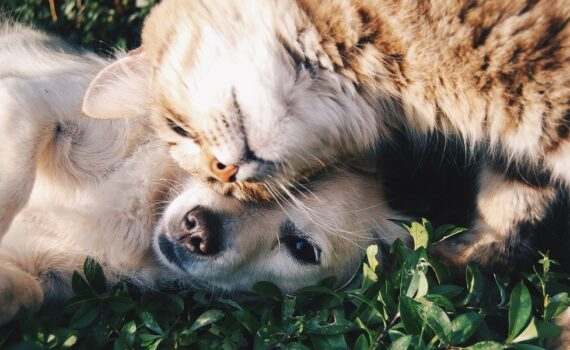 4 Best Pets To Have In Your Home