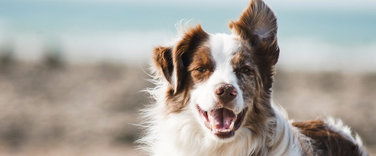 A Guide to Dog Pampering
