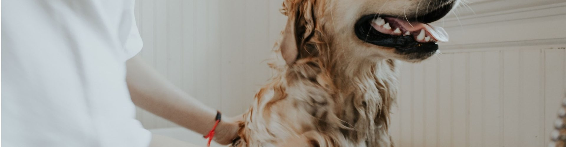 How to Control Pet Hair in Your Home