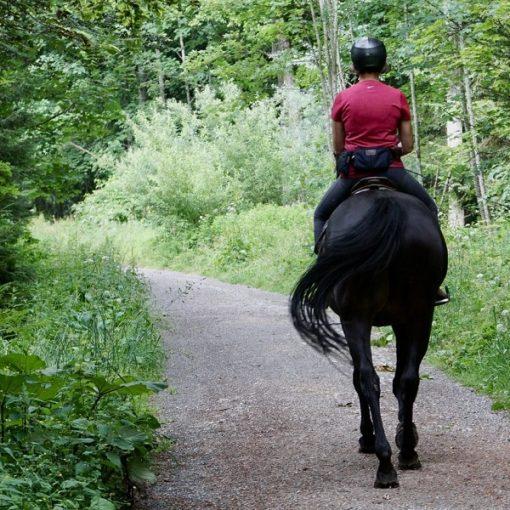 4 Simple Horseback Riding Tips for Beginners