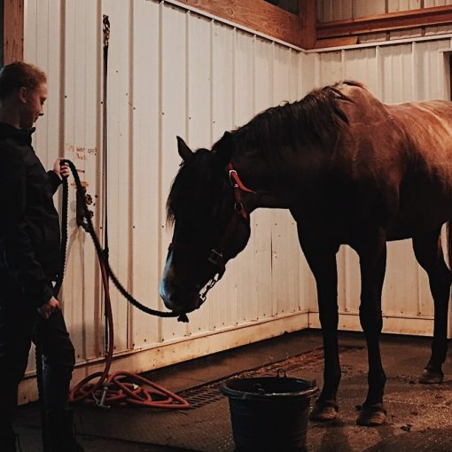 How to Take Care of a Horse: A Basic Guide