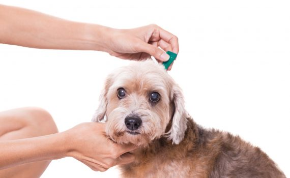 Pet Services to Make Your Life Easier